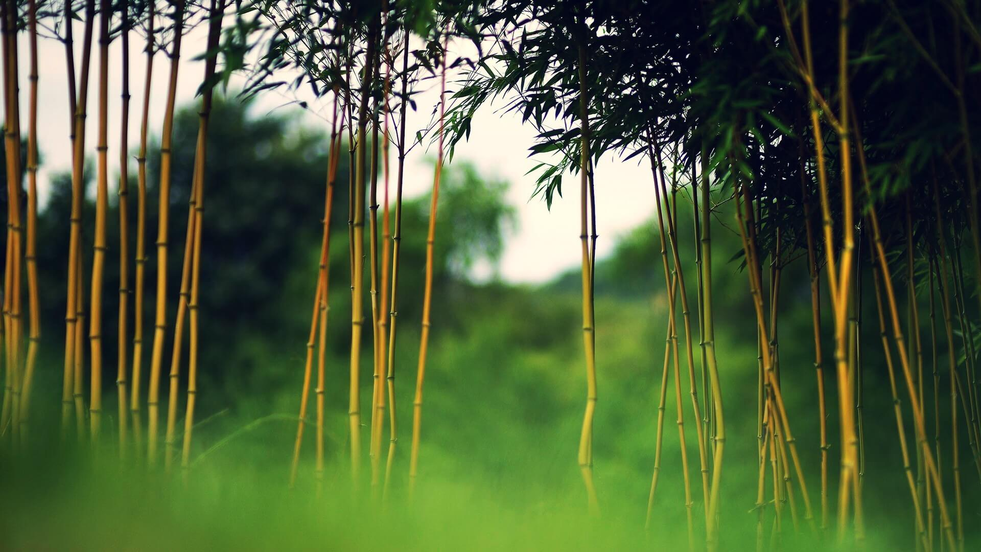 Фотообои на рабочий стол вьетнам моринга дерево