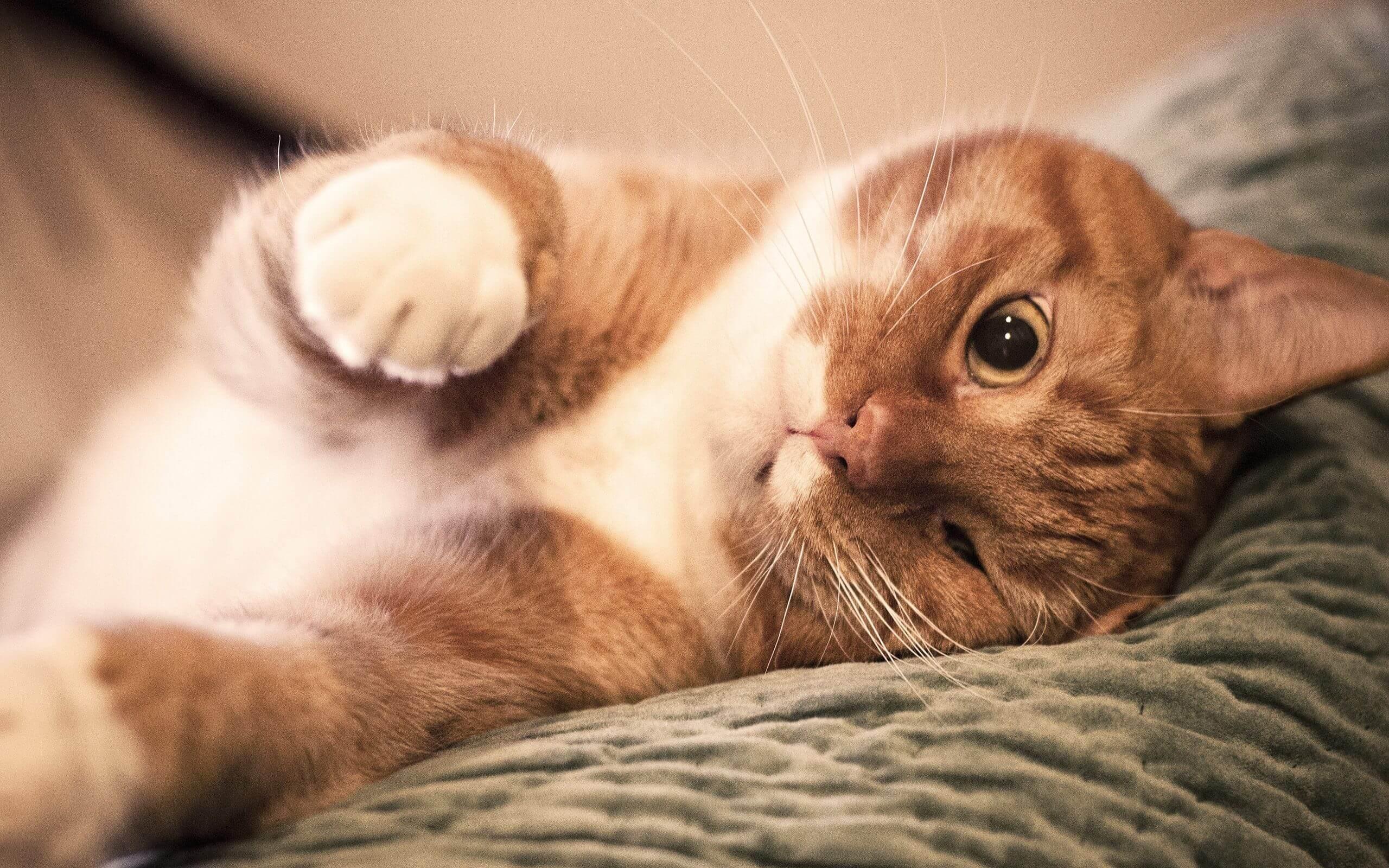 только картинки на рабочий стол животные кошки смешные рекордный показатель